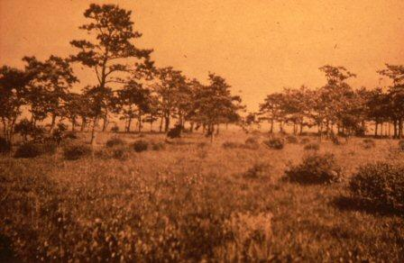 Long Island Pine Barrens Historical Image